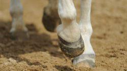 zoccoli-cavallo-3ca75d84