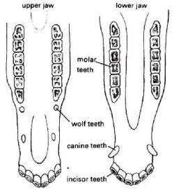 335_dental2-9c5472d0