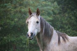 cavallo_muffa-f3fd4450