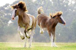 disagio del cavallo twitter de