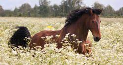 cavallo-ventasso-620x330-cf60894c