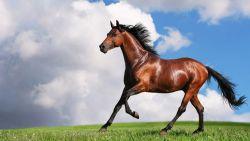 cavallo_jpg-cb3889f6-1