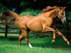 cavallo_trotto-3711d30c-1