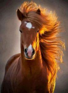 ear_horses_-386dc17e