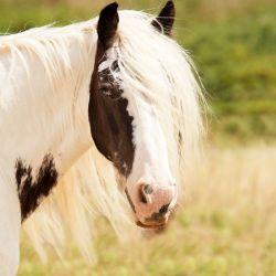 horse-1198003_640-f983f9f7