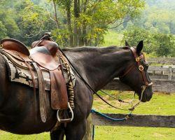 horse-176990_960_720-d2cabf47