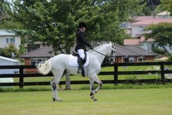 horse-dressage-8e5b7cb2