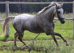 horse-equino-jpg-8e1082b0