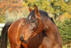 horse-stallone-7a84ffe6-1