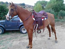 horse_brown-18936194