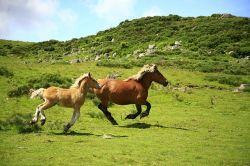 horses-1123042_640-8939cbe4