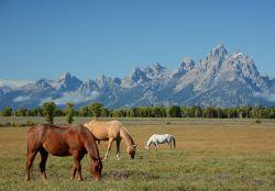 horses-208827_640-2b733aae