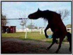 jump-4128b0ee