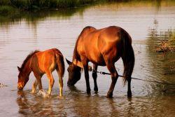 cavalli_abbeverata-eb4275eb