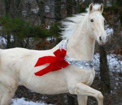 christmas-horse-spirit-4fa8b7df