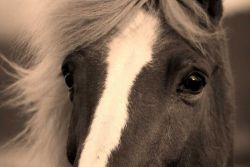 horse_face-ff374734