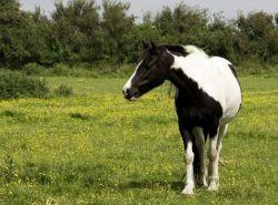 pony_bianco_nero-e04a9d33