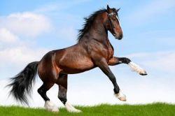 tosatura-cavallo-jpg-e25ac166