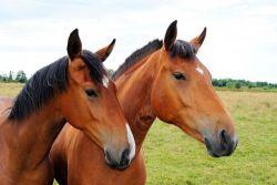 cavalli2-b9da25f0