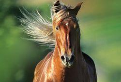 cavallo_art-b0bf4b2f-2