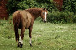 cavallo_libero_natura-8f91db7a