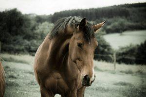 cavallo_liberta