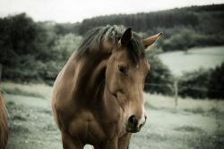 cavallo_liberta-adf2b318