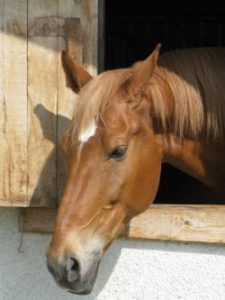 cavallo_ritratto-ebdff692