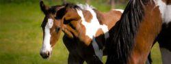 foal-8326ba86-2