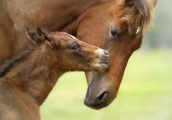 foal-and-mother-jpg-dfaff7e8