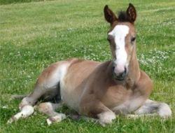 foal-eaab5042