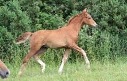 foal-uk-abd3b941