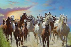 free-horses-a7a11b2b