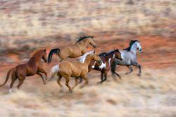 gallopping-jpg-9d6b9fa9