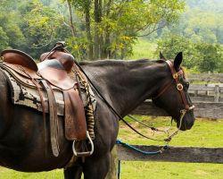 horse-176990_640-1a7d6d58