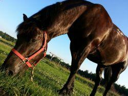 horse-214806_1280-c2276593
