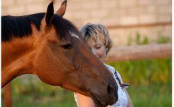horse-3e7b28d6