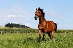 horse-426393_640-12886cc9