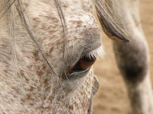 horse-503619_1280