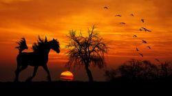 horse-654843_1280-6b003e90