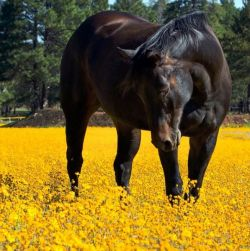 horse-67f7b815
