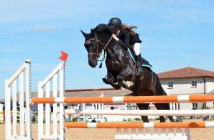 horse-721136_960_720