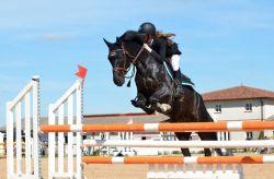 horse-721136_960_720-4160cbd6