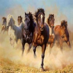 horse-run-jpg-dbfdd18f