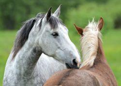 horse_passports-98cf9e79