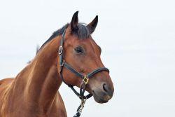 horses-1040953_960_720-9f428865