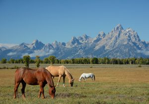 horses-208827_640