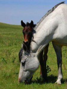 horses-84374_1280-a8d2bacb