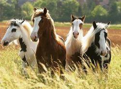horses-d44ec160