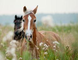 horses-ears-8e22fd81